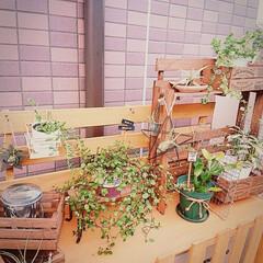 エアプランツ/植物/観葉植物/鉢カバー/すのこ/エアコン室外機/... 狭い賃貸のベランダで ガーデニングスペー…