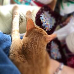 猫のいる生活 動けぬ。(2枚目)
