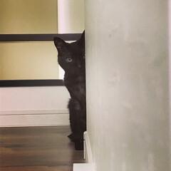 フォトコン/ペット/猫/うちの子/家政婦は見た/きをつけ ひっつき虫なうちの子 もうすぐ 17歳 …
