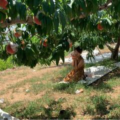 桃狩り 母を連れて桃狩りに行ってきました。 娘2…(4枚目)