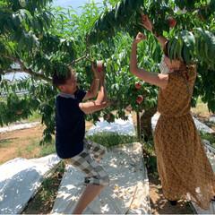 桃狩り 母を連れて桃狩りに行ってきました。 娘2…(7枚目)