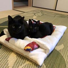 黒猫/布団/プレゼント/ペット/猫/住まい 誕生日のプレゼントにお布団を⭐(笑) 早…