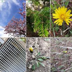 個性/写真の撮り方/写真は難しい/桜/開花/散歩/... 🌸先週の遊び🌸 自然を満喫しちゃおう♫ …