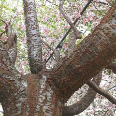 個性/写真の撮り方/写真は難しい/桜/開花/散歩/... 🌸先週の遊び🌸 自然を満喫しちゃおう♫ …(3枚目)