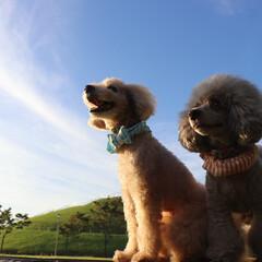 ペット/犬/ファッション/だいず/あずき/未来に向かって 未来に向かって頑張ろう!みたいな写真が撮…
