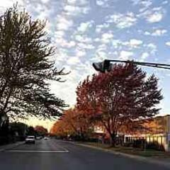 紅葉/モントリオール/散歩道/木/秋/おでかけ autumn in Montreal