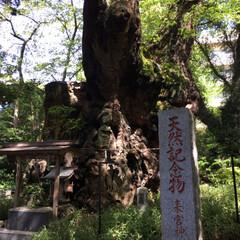 パワースポット/神社 熱海の人気スポット、来宮神社へ⛩ 樹齢2…(4枚目)