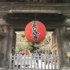 神社/寺/観光/鎌倉/旅 久しぶりに鎌倉をブラブラしてみました。長…(2枚目)