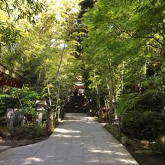 パワースポット/神社 熱海の人気スポット、来宮神社へ⛩ 樹齢2…