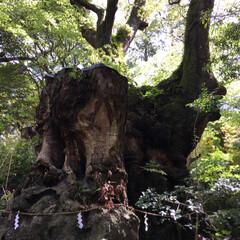 パワースポット/神社 熱海の人気スポット、来宮神社へ⛩ 樹齢2…(5枚目)
