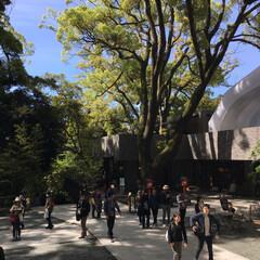 パワースポット/神社 熱海の人気スポット、来宮神社へ⛩ 樹齢2…(3枚目)