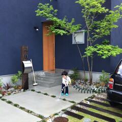 自然素材/無垢材/四角の家/ハコの家/外構/庭/... . ~シンプルなハコ型の家は  庭の緑が…