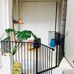 土間/ペット/ワンちゃん/サークル/観葉植物/白い壁/... . ~土間スペースに配置した  『ワンち…