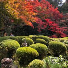 スマホでパ写リ/京都詩仙堂/ブラ〜とお出かけ 明日大阪で用事があって京都に行ってきまし…
