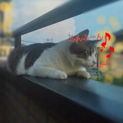 猫と暮らす 2階のベランダの手すりがお気に入りのオル…