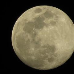 平成最後の満月🌕/平成最後の一枚/フォロー大歓迎 夜のゴミ出しに出たついでに  カメラを持…(1枚目)