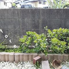 小さい庭/簡単/暮らし/DIY 皆さんのお庭をみて、いいなぁと 思う毎日…(2枚目)