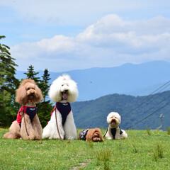 快適/22℃/標高2000メートル/山頂/丸沼高原/ペット/... 暑い日は山頂に限るね! と、4匹が申して…