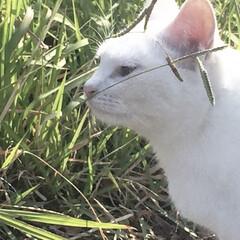 猫/散歩/おでかけ/秋/風景 今日は、父のお墓参りへ 月に一回お掃除し…