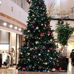 フォロー大歓迎/リミとも部/ツリー🎄/クリスマス/ショッピングモール/大きい/... 資格の試験後、近くのショッピングモールへ…