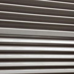Dyson V6 Fluffy Cordless Vacuum Cleaner for Hard Floors by Dyson | ダイソン(ハンディークリーナー)を使ったクチコミ「汚画像でごめんなさい🙏 今日は天気が良く…」(6枚目)