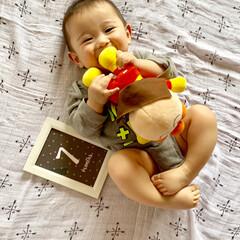 生後7ヶ月/男の子/赤ちゃん またまたすっかりご無沙汰💦💦  先月、7…