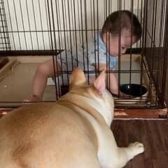 癒し/赤ちゃんと犬/いたずらっ子/お水パシャパシャ/水遊び/ぶさかわ/... 🐶あたちのお水ーーー💦💦 無くなっちゃっ…