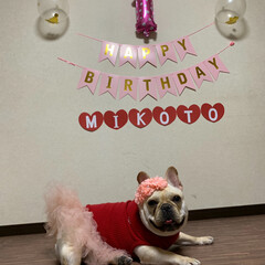 手作りケーキ/アレルゲンフリー/ぶさかわ/鼻ぺちゃ/フレンチブルドッグ/フリフリスカート/... 今日で1歳のお誕生日🎂💖    🐶なんな…