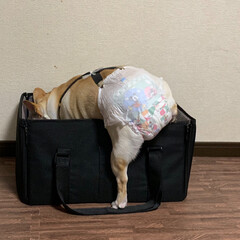 お気に入りの場所/LIMIAペット同好会/フォロー大歓迎/ペット/ペット仲間募集/犬/... ドライブボックスを車に持っていくのに 床…
