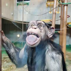 旭山動物園/動物園/サル 旭山動物園の猿です