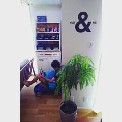 ワトコオイル/無垢の床/観葉植物/100きん/初めての大物/棚/... 私が大きいものを作ろうと決心して、初めて…
