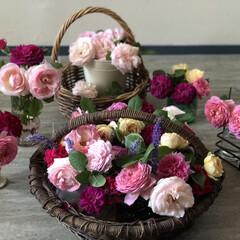 我が家の暮らし/Rose/ピエールドゥロンサール/薔薇/暮らし 今年我が家で咲いた薔薇たち