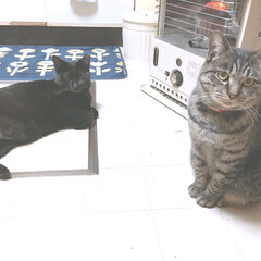 きょうだい猫/タマちゃん/クロちゃん/猫/にゃんこ同好会/ペット ストーブは神✨