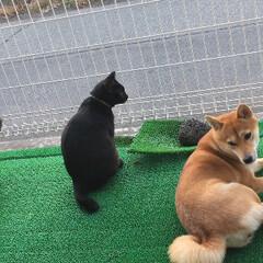 にこちゃん/柴犬/ネコ/イヌ/タマちゃん/クロちゃん/... なかよきことはうつくしきことかな