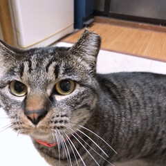 タマちゃん/猫/にゃんこ同好会/ペット おタマちゃんでございます