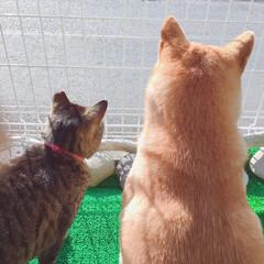 にこちゃん/柴犬/イヌ🐕/おタマちゃん/ネコ🐈/春のフォト投稿キャンペーン/... どこみてんのよー