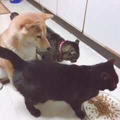 おタマちゃん/クロちゃん/にこちゃん/柴犬/犬/猫 ひとつのごはんに わんさか わんさか