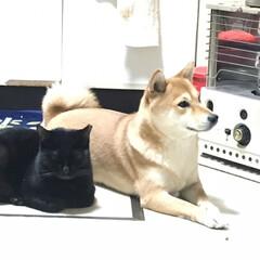 ストーブ/クロちゃん/ニコちゃん/冬/犬/猫 今日は一段と寒いですなー