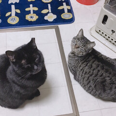 冬/猫 ストーブついてないけど 座ってる