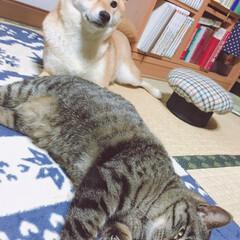 ニコちゃん/柴犬/イヌ🐕/おタマちゃん/ネコ🐈 まったりタイム