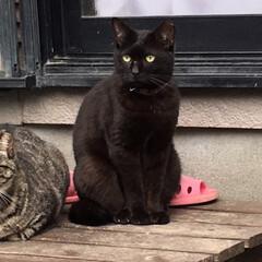おタマちゃん/クロちゃん/ネコ🐈/春のフォト投稿キャンペーン/ありがとう平成/フォロー大歓迎/... ネコ達が、 いつも覗いているフェンスの隙…