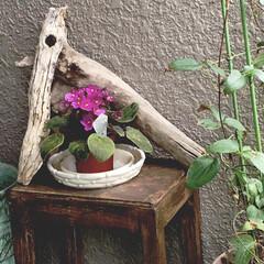 DIY/スツール/お花💐/流木 DIYしたスツールと流木とお花🌺