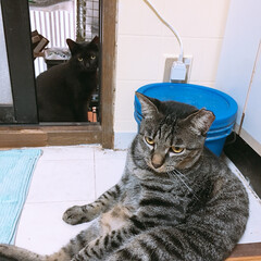 タマちゃん/ネコ/ペット タマちゃんのどっかり座り