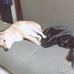 なかよしさん/クロちゃん/にこちゃん/犬/猫/ペット なかよしさん  ハイタッチ🤚