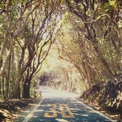 夏の木漏れ陽/自然/木のトンネル/高知県/おでかけ 高知県 木のトンネル