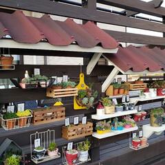 ガーデニング/ガーデン/オンデュリン/ウッドデッキDIY/ウッドデッキ/多肉棚DIY/... ウッドデッキのフェンスに作った、多肉棚 …