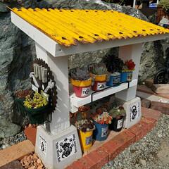 多肉植物寄せ植え/多肉寄せ植え/多肉植物/多肉/多肉棚DIY/多肉棚 多肉棚作りました。 屋根は透明のポリカ波…