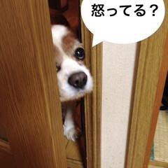 家政婦は見た/覗き見/じー/愛しい/愛犬/結局は可愛い/... いたずらをしたので叱ったら逃げましたが、…