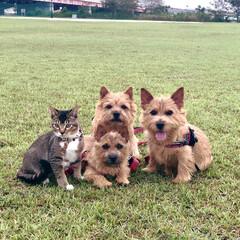 テリア/猫/ペット/ファミリー/puppy/家族/... 皆んなでお散歩🐾