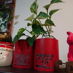 ウサギちゃん/ポトス/観葉植物のある暮らし/クリスマス2019/ダイソー/セリア/... ロール紙の芯。 職場で廃棄するというので…(1枚目)